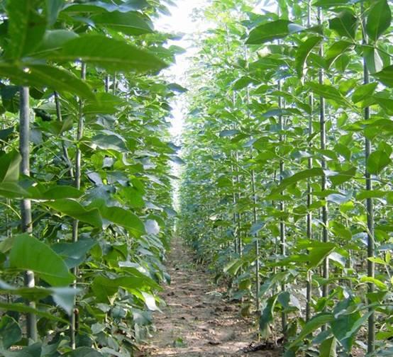 白蜡培育壮苗创造了良好条件